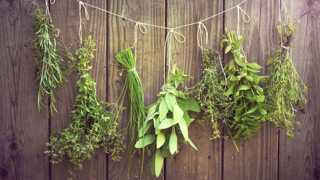 Drying and Preserving Herbs